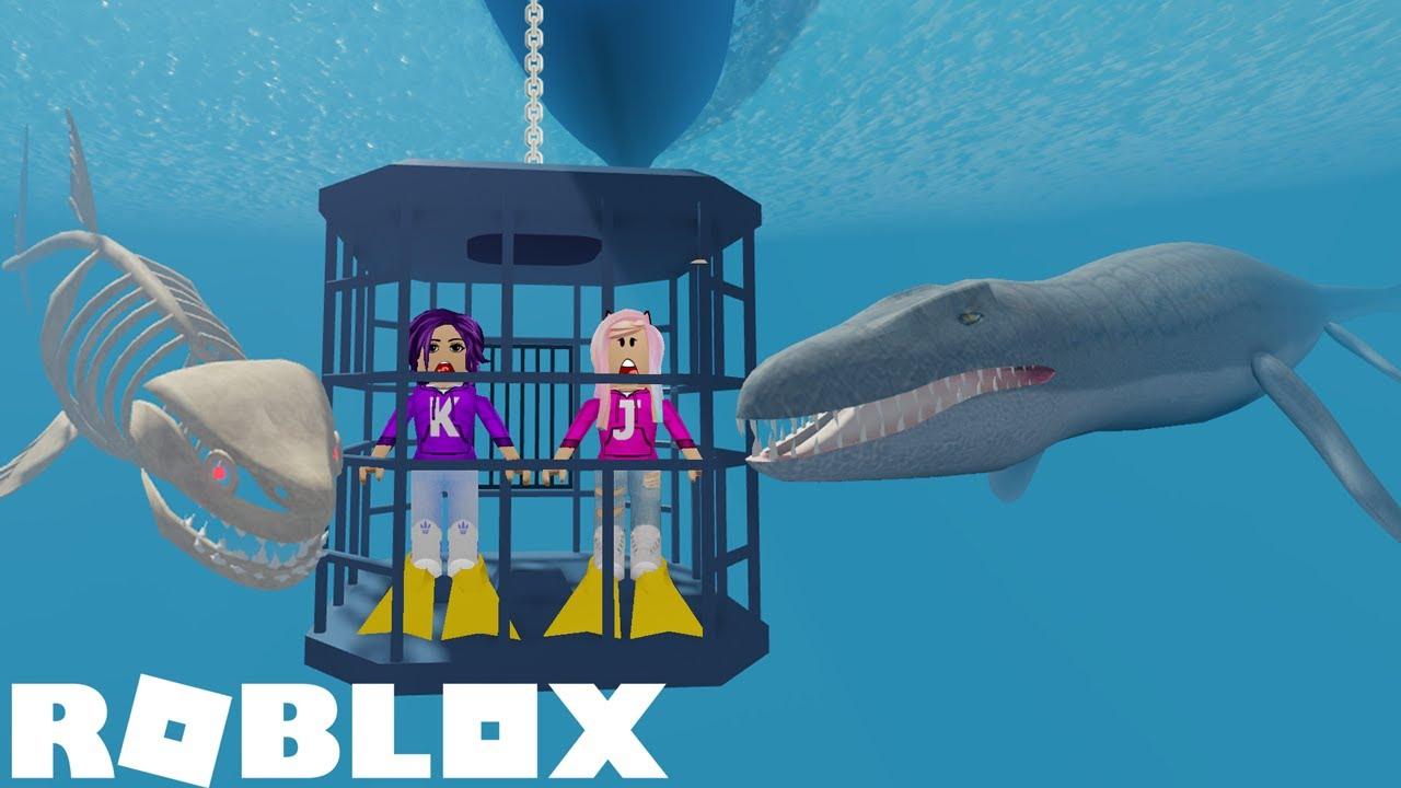 SharkBite Codes